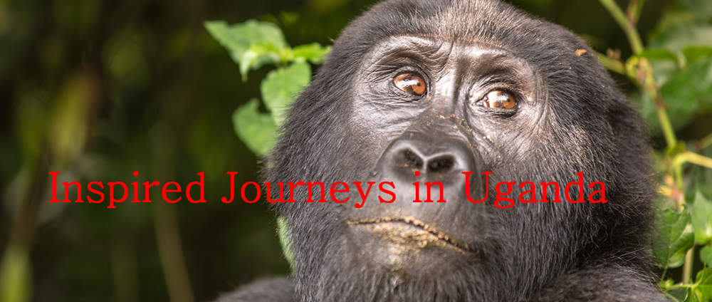 Inspired Journeys in Uganda , East Africa